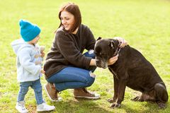 Mother and daughter in the park walking with their big dog Cane. Corso Royalty Free Stock Images