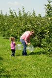 Mother and daughter picking apples. People picking apples in an orchard Stock Photos