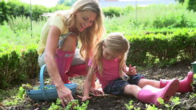 Mother And Daughter Picking Radish On Allotment stock footage