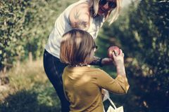 Mother and daughter picking some apples. Together in a garden stock images
