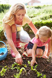 Mother And Daughter Planting Seedlings On Allotment. Wearing Pink Wellies Royalty Free Stock Photos