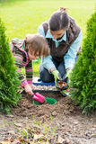 Mother and daughter planting tulip bulbs Stock Images