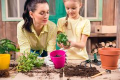 Mother and daughter with plants and flowerpots standing at table Stock Photography