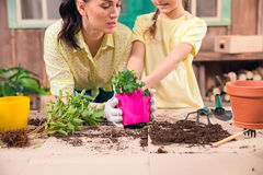 Mother and daughter with plants and flowerpots standing at table Royalty Free Stock Image