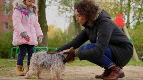 Mother and daughter playing with dog on playground.  stock video footage