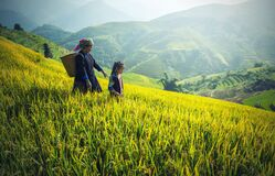 Mother and daughter in rice paddy field