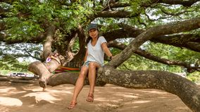 Mother and daughter sittiing on branch of Giant Monkeypod Tree stock images