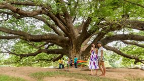 Mother and daughter standing in front of Giant Monkeypod Tree royalty free stock photography