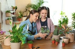 Mother and daughter taking care of plants royalty free stock photos