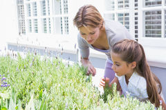 Mother and daughter tending to flowers Royalty Free Stock Images