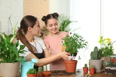 Mother and daughter transplanting plant stock image
