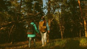 Mother and daughter travelers walking through the woods with a backpack. Hiker Girs in a pine forest. The tourist enjoys stock video