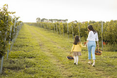 Mother and daughter in vineyard. Young mother and her cute girl have fun in autumn vineyard royalty free stock photos