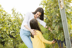 Mother and daughter in vineyard. Young mother and her cute girl have fun in autumn vineyard stock photo