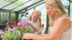 Mother And Daughter Watering Plants In Greenhouse stock video