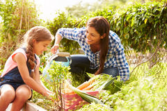 Mother And Daughter Working On Allotment Together Stock Photography