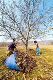 Mother and daughter working in an orchard Stock Photography