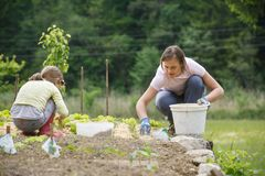 Mother and daughter working in the vegetable garden royalty free stock image