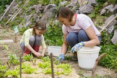 Mother and daughter working in the vegetable garden. Mother and daughter working together in the vegetable garden. Quality time, mother-daughter relationship royalty free stock images
