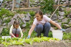 Mother and daughter working in the vegetable garden royalty free stock photo