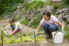 Mother and daughter working in the vegetable garden. Mother and daughter working together in the vegetable garden. Quality time, mother-daughter relationship stock photo