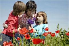Mother and daughters in the corn poppy Royalty Free Stock Image