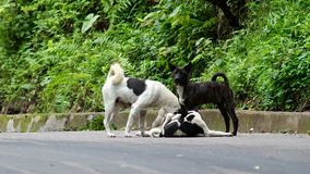 Mother dog clean her puppy. A mother dog is cleaning her offspring stock video