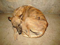 Mother Dog and its puppy sleeping together during winter to share body warmth Stock Images