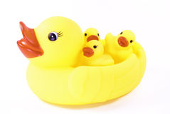 Mother Duck Carrying her Babies Royalty Free Stock Photo