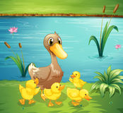 A mother duck with her ducklings in the river vector illustration