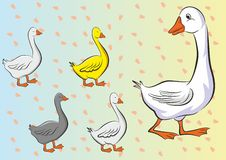 Mother duck and her little happy ducks with footprints background. (Vector in CMYK Stock Photo