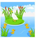 Mother duck swims with her four little cute ducklings in the river royalty free illustration