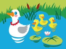 Mother duck with three baby ducks in the pond. Stock Photography