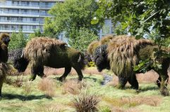 Mother Earth; buffalo, at MosaiCulture 2018. MosaiCulture 2018, Jacques Cartier Park, Gatineau, Quebec, Canada, 09/13/2018, Mother Earth; buffalo, one of the 45 stock photo