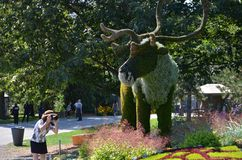 Mother Earth; Elk, at MosaiCulture 2018. MosaiCulture 2018, Jacques Cartier Park, Gatineau, Quebec, Canada, 09/13/2018, Mother Earth; Elk, one of the 45 stock photo