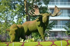 Mother Earth; moose, at MosaiCulture 2018. MosaiCulture 2018, Jacques Cartier Park, Gatineau, Quebec, Canada, 09/13/2018, Mother Earth; moose, one of the 45 royalty free stock image
