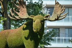 Mother Earth; moose, at MosaiCulture 2018. MosaiCulture 2018, Jacques Cartier Park, Gatineau, Quebec, Canada, 09/13/2018, Mother Earth; moose, one of the 45 royalty free stock images