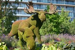Mother Earth; moose, at MosaiCulture 2018. MosaiCulture 2018, Jacques Cartier Park, Gatineau, Quebec, Canada, 09/13/2018, Mother Earth; moose, one of the 45 stock photos