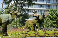 Mother Earth; moose, at MosaiCulture 2018. MosaiCulture 2018, Jacques Cartier Park, Gatineau, Quebec, Canada, 09/13/2018, Mother Earth; moose, one of the 45 stock images