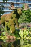 Mother Earth; moose, at MosaiCulture 2018. MosaiCulture 2018, Jacques Cartier Park, Gatineau, Quebec, Canada, 09/13/2018, Mother Earth; moose, one of the 45 royalty free stock photos