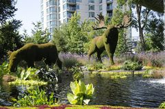 Mother Earth; moose, at MosaiCulture 2018. MosaiCulture 2018, Jacques Cartier Park, Gatineau, Quebec, Canada, 09/13/2018, Mother Earth; moose, one of the 45 stock photography