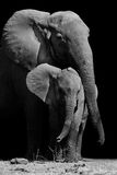 Mother Elephant and Baby Stock Image