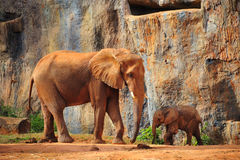 Mother Elephant with baby Elephant Stock Photography