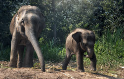 Mother elephant with baby Royalty Free Stock Photos