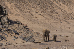 Mother elephant and calf in the Namib desert Stock Photos