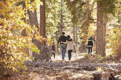 Mother, father and two children hiking in forest, back view Stock Image