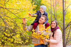 Mother and Father With Young Son On Shoulders Autumn Park royalty free stock photo