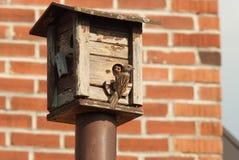 Mother feeding her baby at a bird feeder Stock Photos