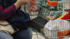 Mother feeding overweight child with unhealthy food, obesity, health problems. Stock footage stock footage