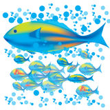 Mother fish & babies. Illustrate fishes, mother fish and baby fishes swimming through blue bubbles Stock Photos